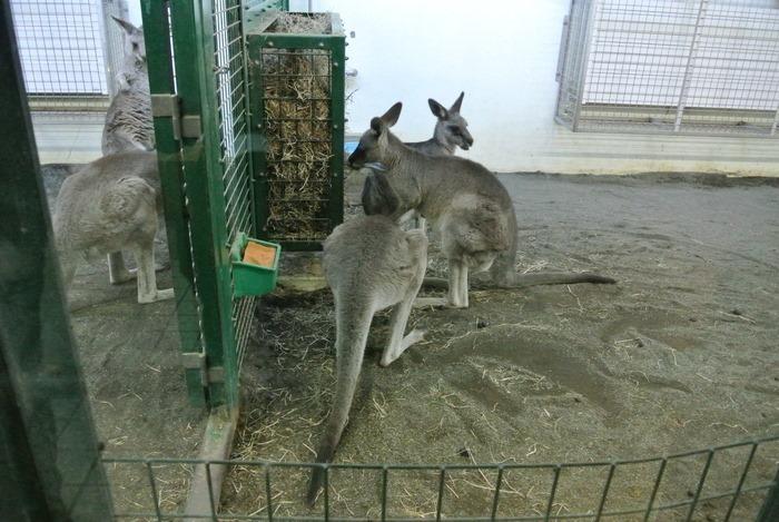 cat20201018150123
